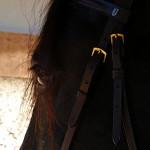 Hästar som testar