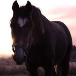 Vad vill hästen ha dig till?