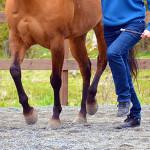 Let's Dance – Följ hästens rytm