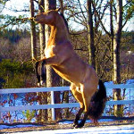 Mitt bästa hästminne