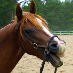 Hästar som stjäl pauser