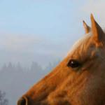 Hästens själ
