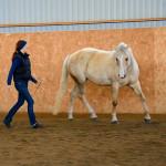 Hur motiverar du din häst?