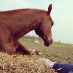 7 enkla tips för att stärka relationen med din häst