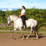 Hästar som förekommer sin ryttare