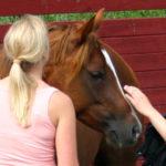 Ser hästen dig som en telefonförsäljare?