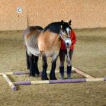 Ge hästen en pausruta