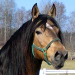 Hur många fel har din häst?