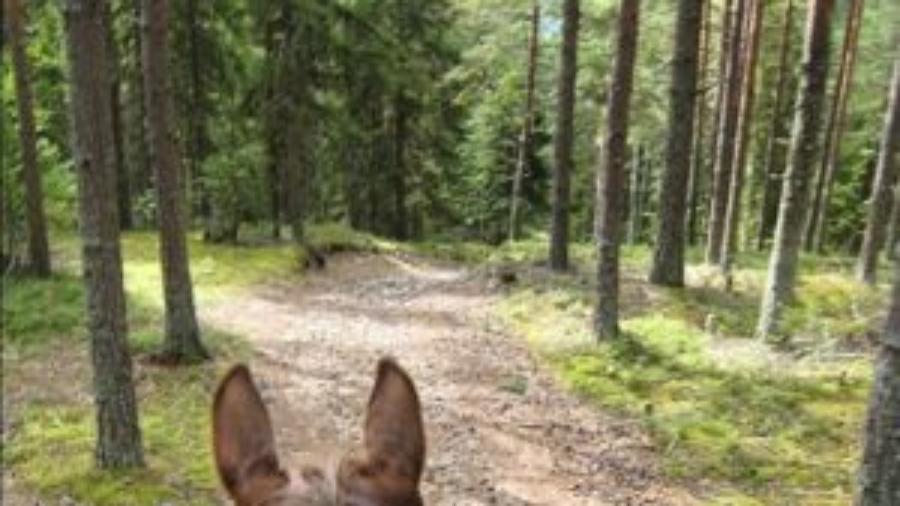skog-e1469996842824-300x300