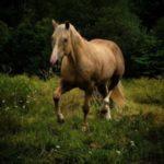 Hästen tar över