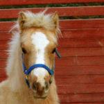 Om hästen blir lydig har jag misslyckats