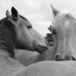 Att bli ett med hästen är utgångsläget