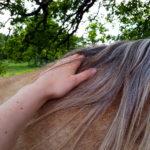 Det själsliga hästlivet